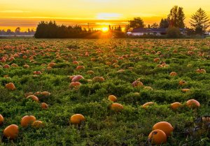 Read more about the article What about pumpkin flour?